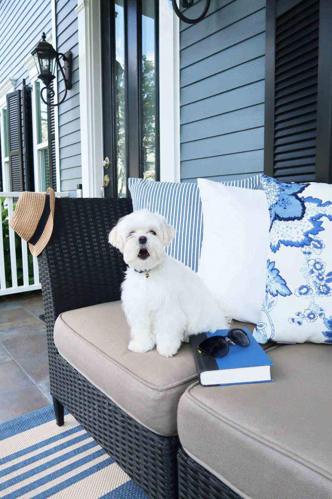 Mick barking at the neighbors with blue and white pillows on front porch