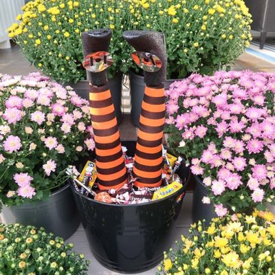 Upside down wicked witch leg bucket in between colorful mums