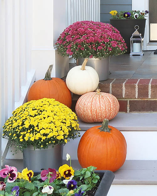 fall color mix of mums pansies and pumpkins