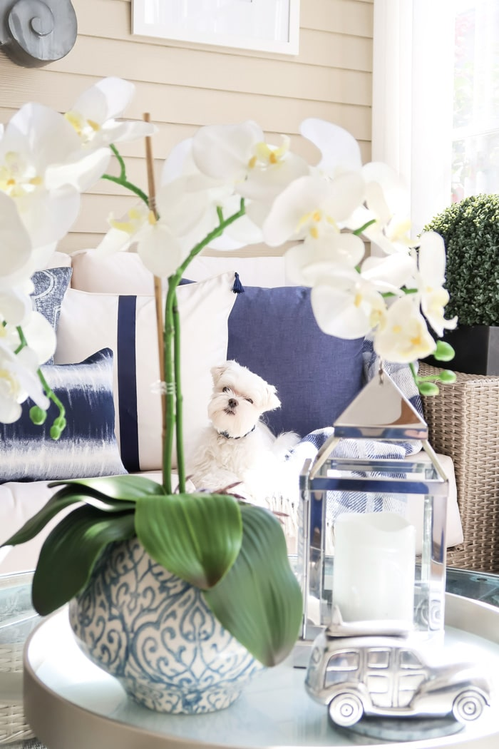 mick-the-maltese-laying-in-white-navy-pillows-looking-throw-faux-orchids-blue-white-planter-on-tray-min
