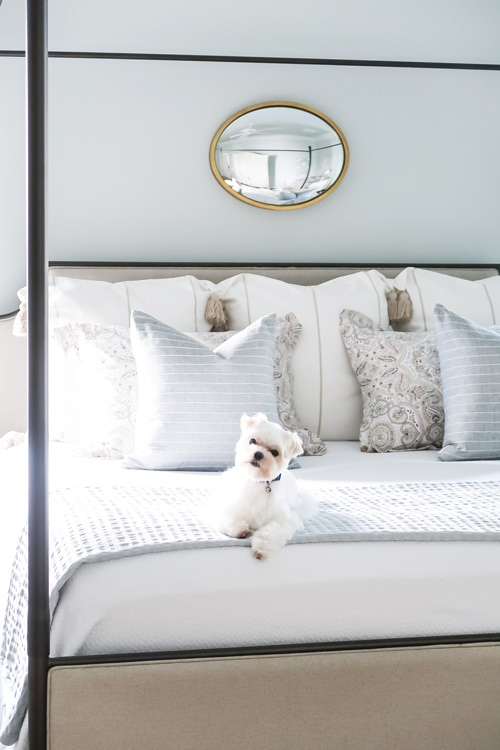 mick-the-maltese-at-the-end-of-bed-as-the-sun-sets