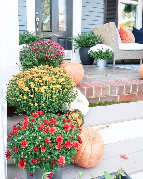 fall-mums-front-entry-gold--red-pumpkins